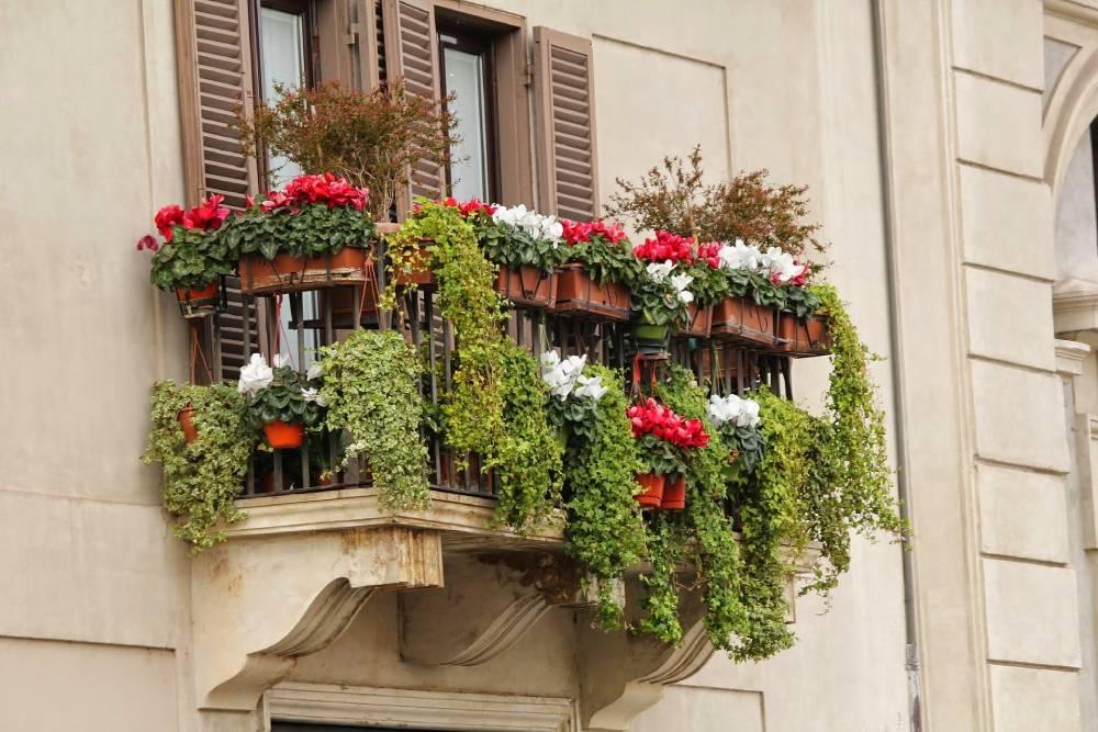 Jakie rośliny posadzić na nasłonecznionym balkonie?