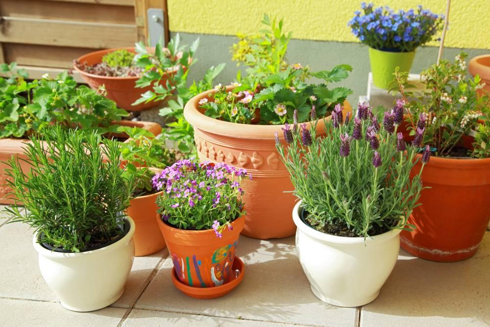 Ogródek ziołowy na balkonie