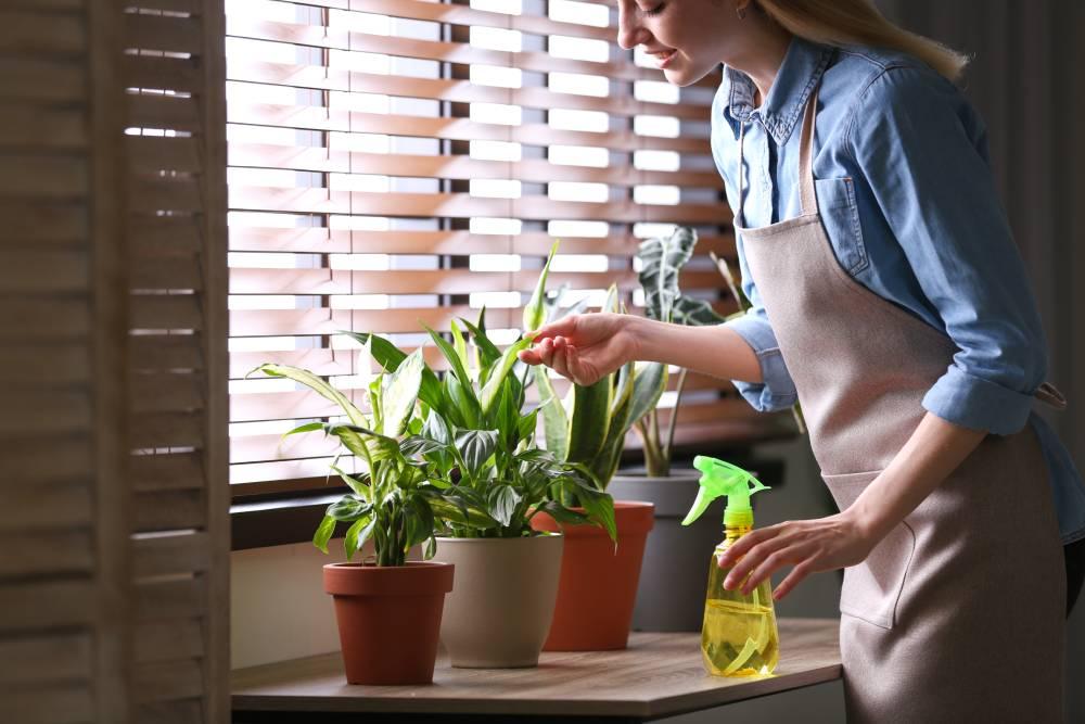 Rośliny dobre na stres